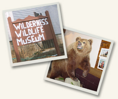 Wilderness Wildlife Museum